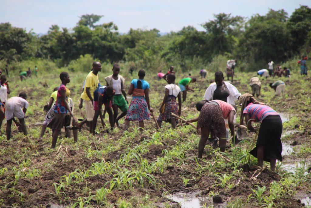 Jeder muss bei der Bewirtschaftung der Felder helfen.
